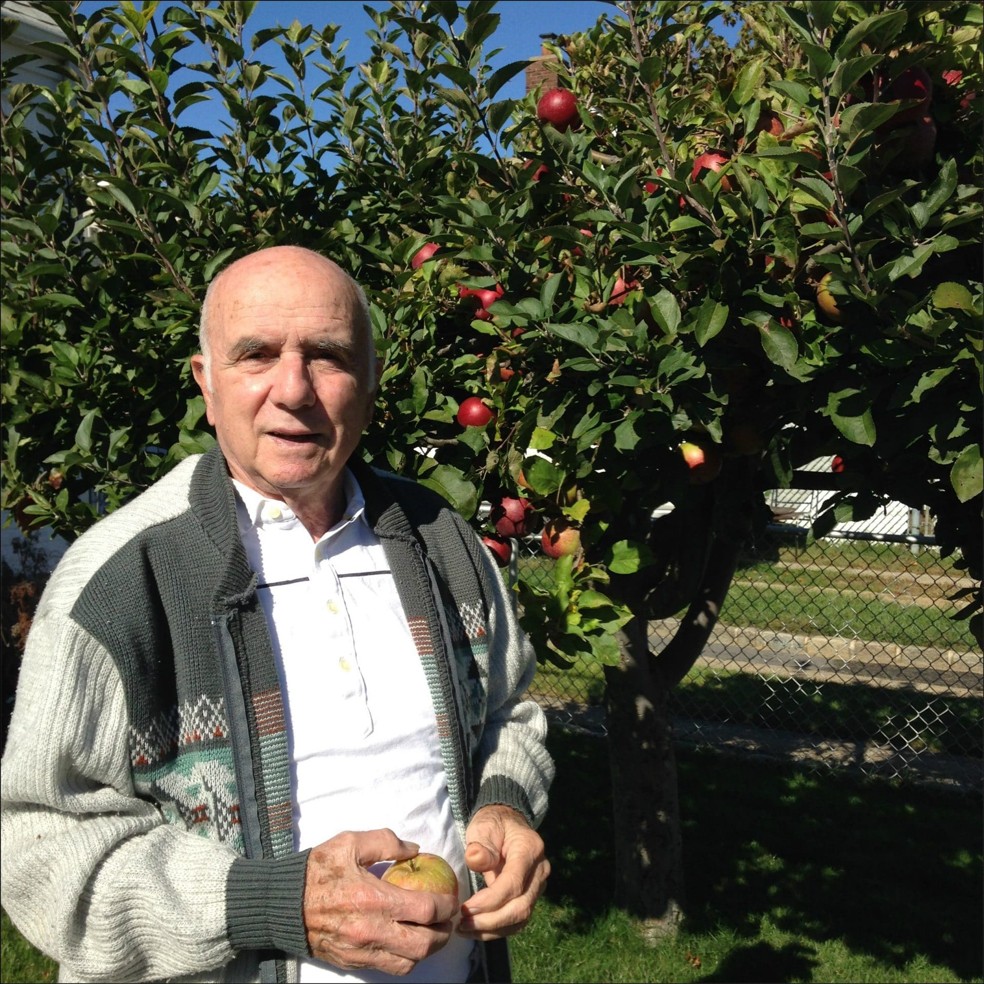 Gratitude List-Tree of many fruits